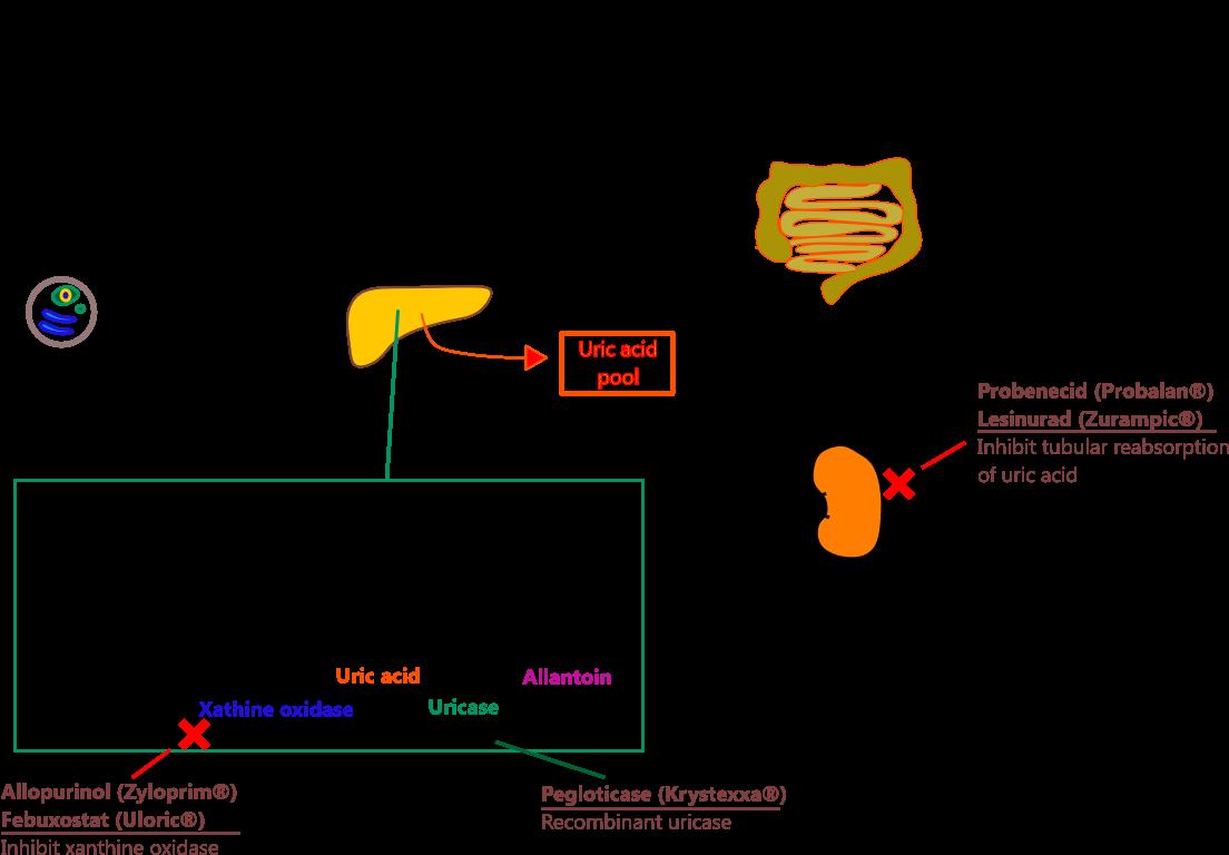Allopurinol Gout