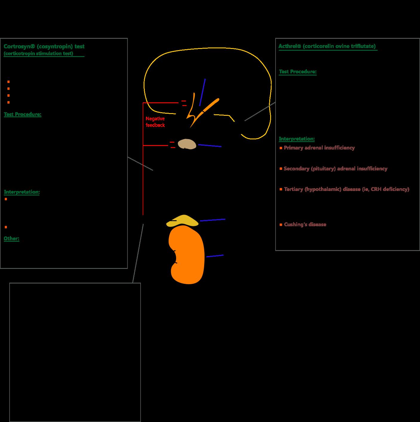 corticosteroids adrenal gland