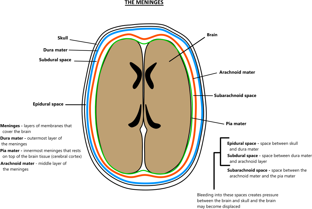 phantoms in the brain pdf