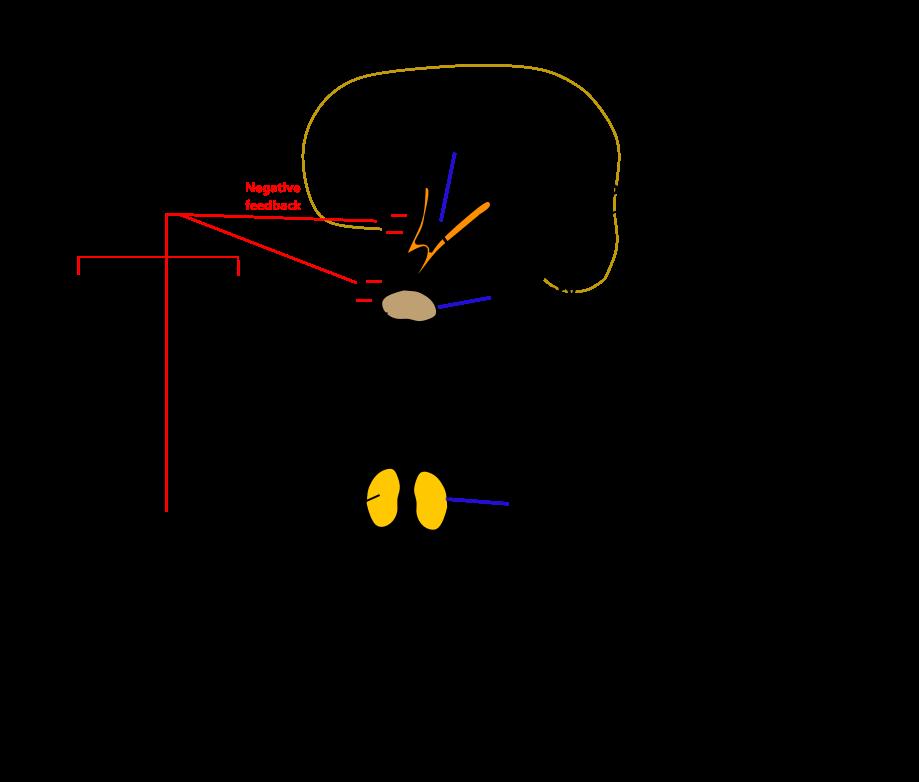 Prosztatagyulladás úszómedence, A prosztatagyulladás eredetének okai