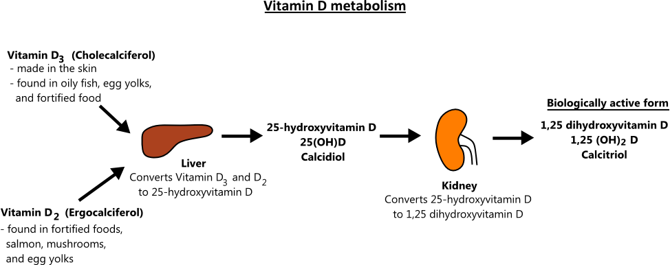 Alfacalcidol Vs Vitamin-D3